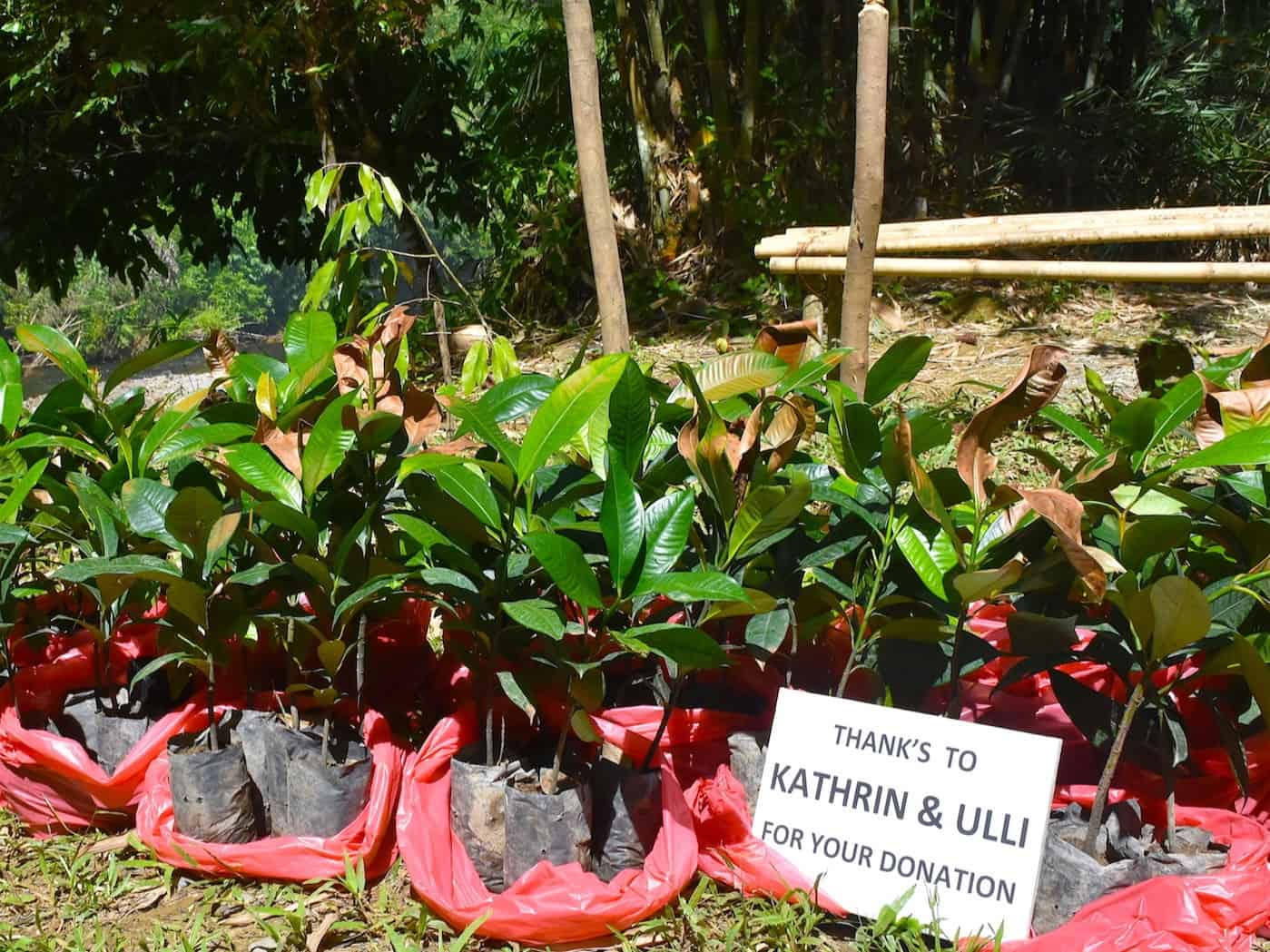Trees For The Future - Sumatra EcoTravel Bukit Lawang
