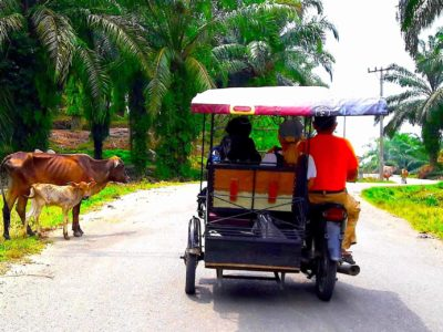 JUNGLE TAXI - LOCAL LIFE -SUMATRA ECOTRAVEL