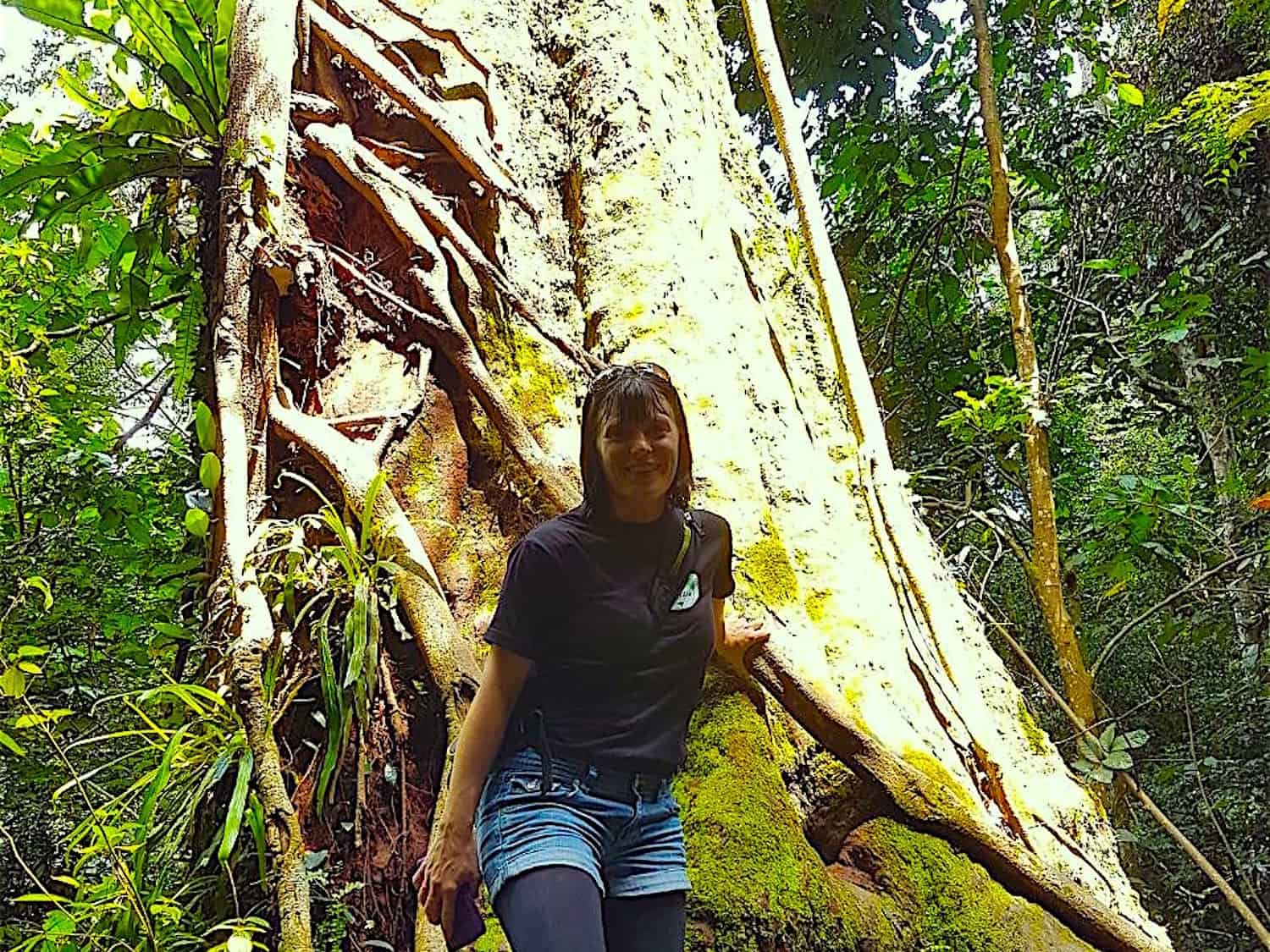 BUKIT LAWANG JUNGLE TREKKING - JUNGLE VIEW HIKE - SHORT TREK BY SUMATRA ECOTRAVEL