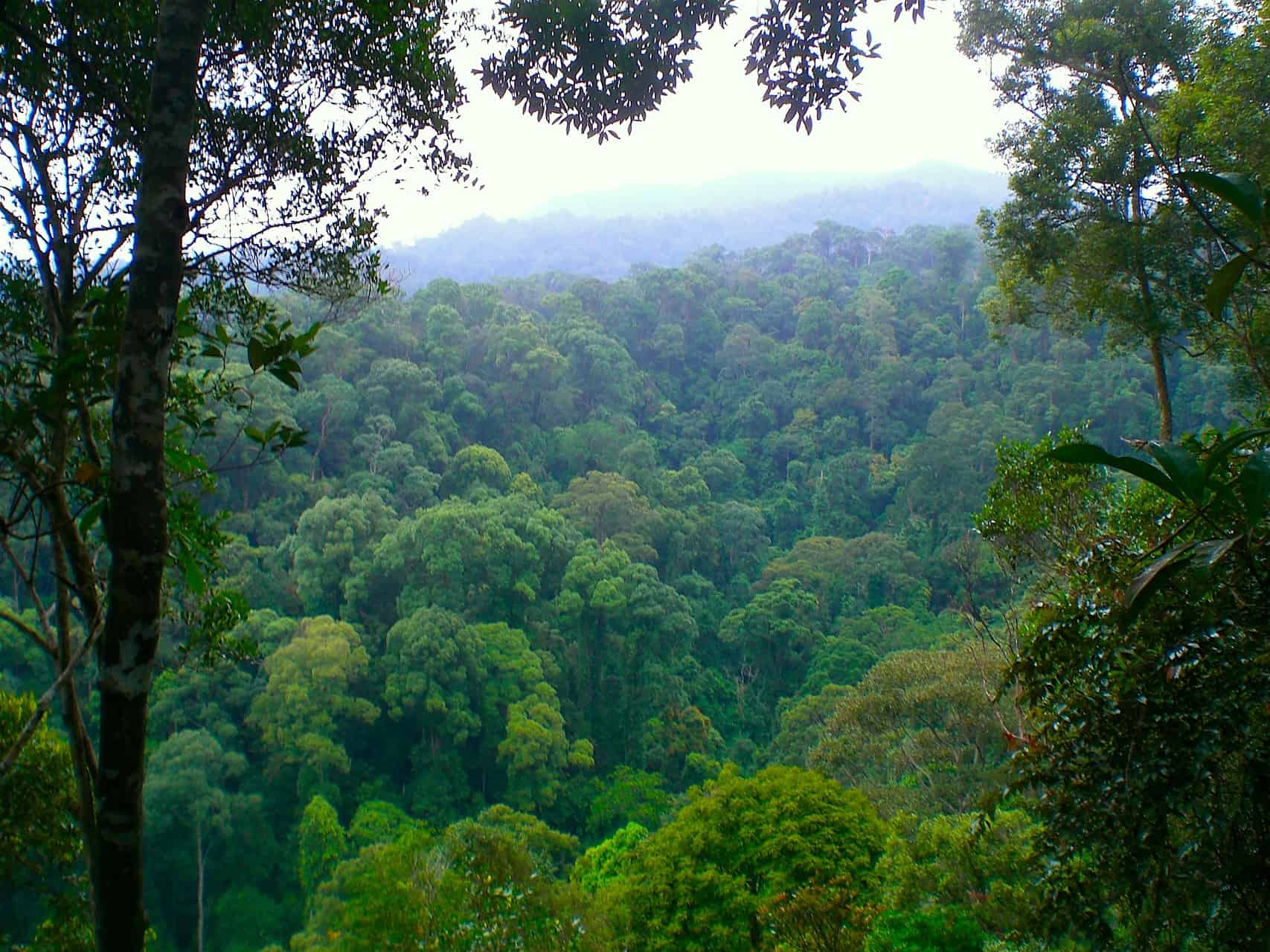 GUNUNG LEUSER NATIONALPARK - BUKIT LAWANG - HIGHLIGHT IN NORTHERN SUMATRA - SUMATRA ECOTRAVEL