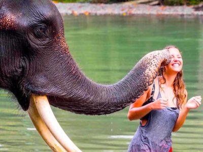 TANGKAHAN ELEPHANTS - SUMATRA ECOTRAVEL BUKIT LAWANG