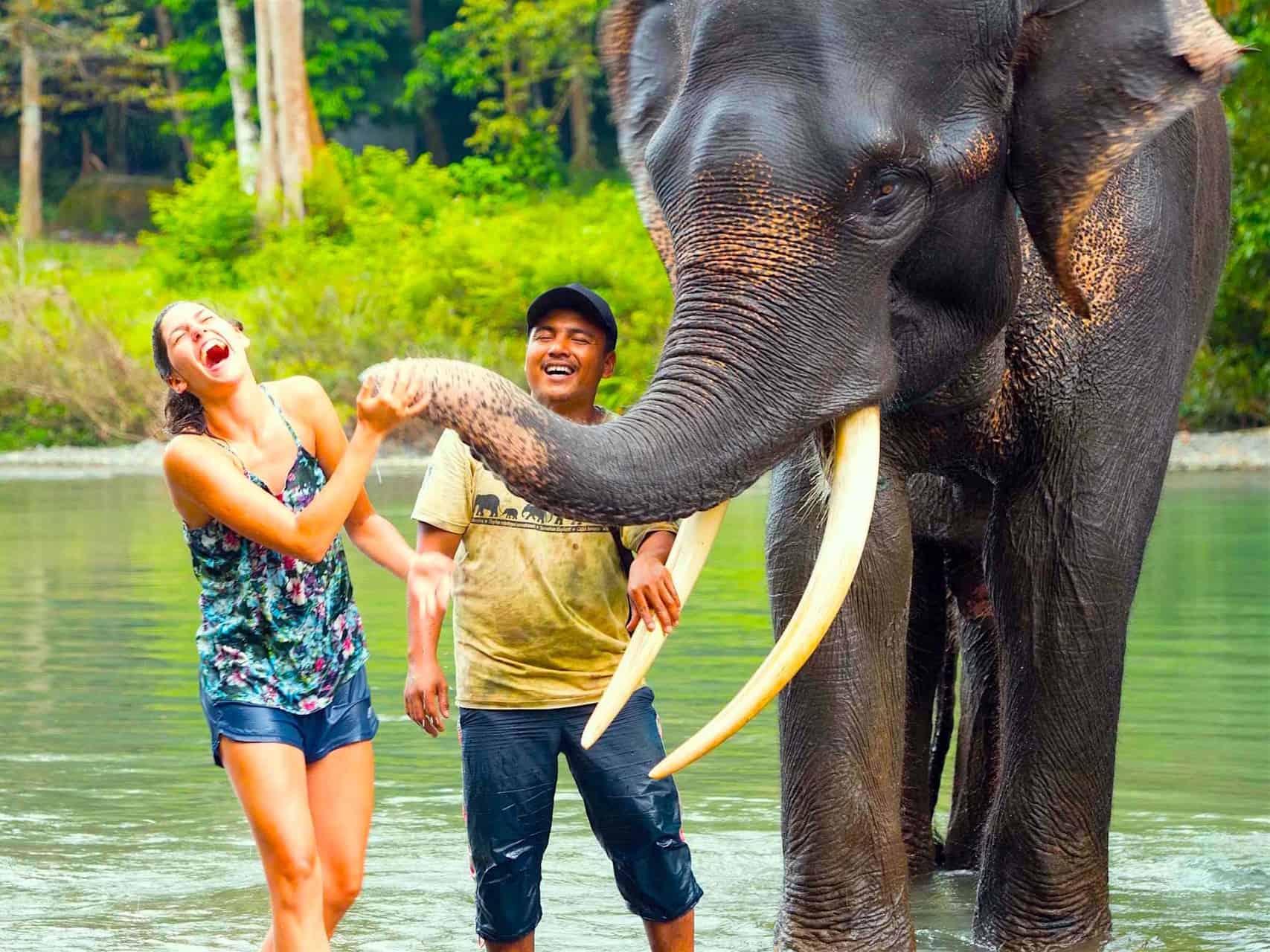 ELEPHANT KISS - SUMATRAN ELEPHANT IN TANGKAHAN - ORANGUTANS & ELEPHANTS PACKAGE BY SUMATRA ECOTRAVEL