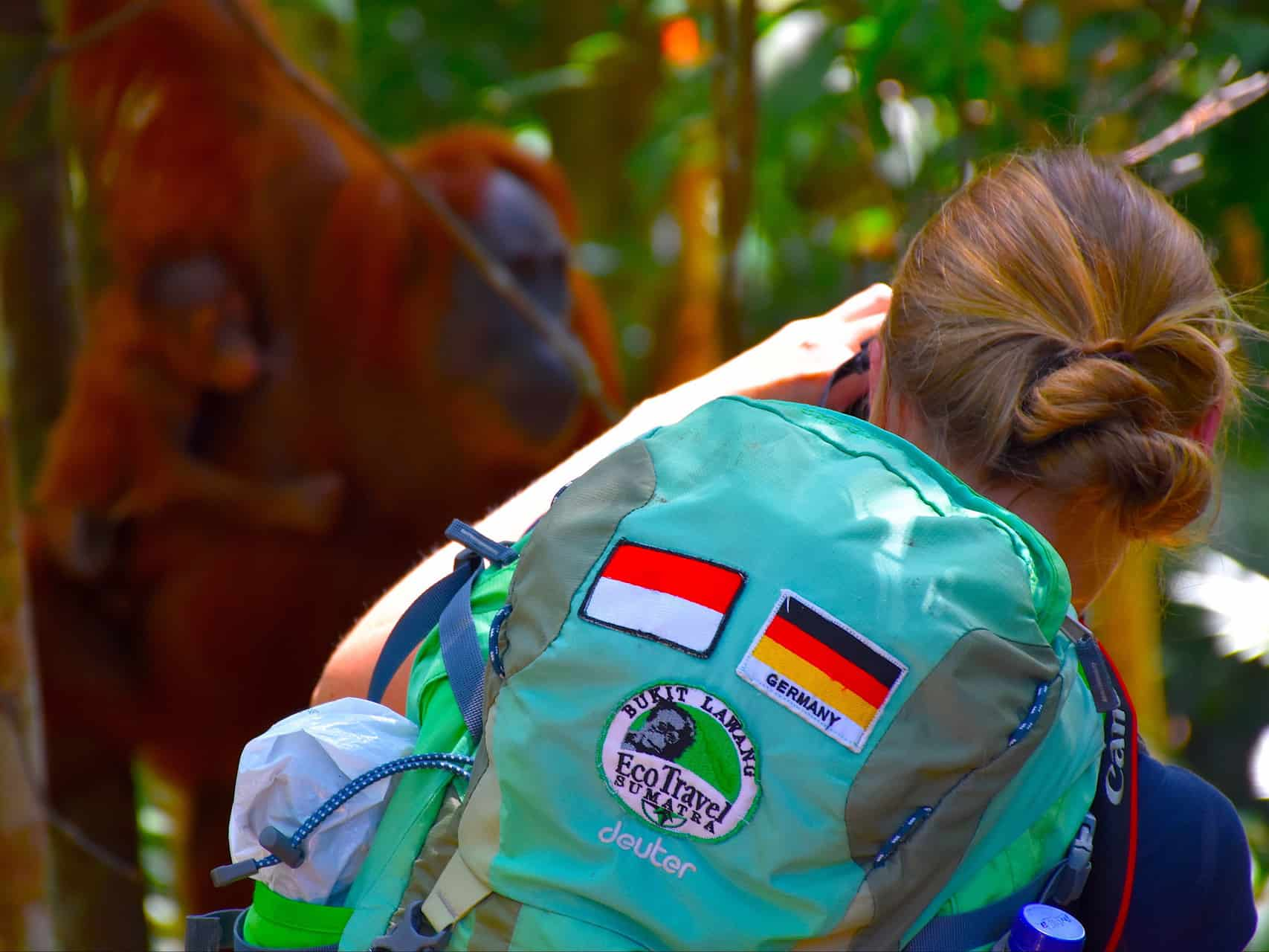 ORANGUTAN TREK - BUKIT LAWANG JUNGLE TREKKING - SUMATRA TRAVEL TIPS - BY SUMATRA ECOTRAVEL