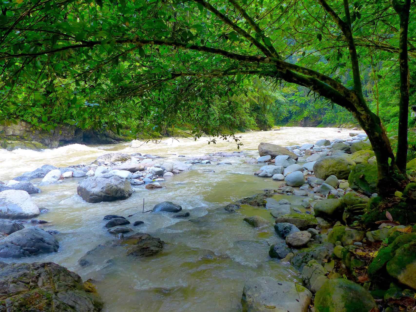 BOHOROK RIVER - JUNGLE TREKKING - BUKIT LAWANG - SUMATRA ECOTRAVEL