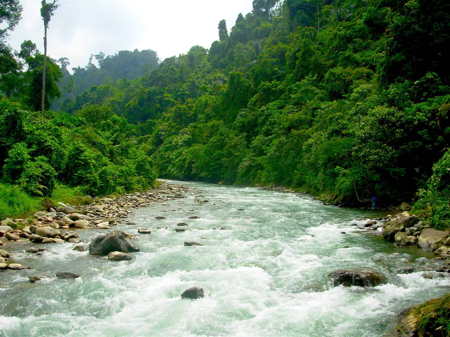 JUNGLE TREKKING - SUMATRA ECOTRAVEL - BUKIT LAWANG