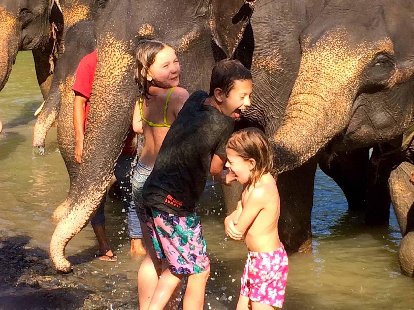 SUMATRAN ELEPHANTS - ELEPHANT AACTIVITY IN TANGKAHAN BY SUMATRA ECOTRAVEL