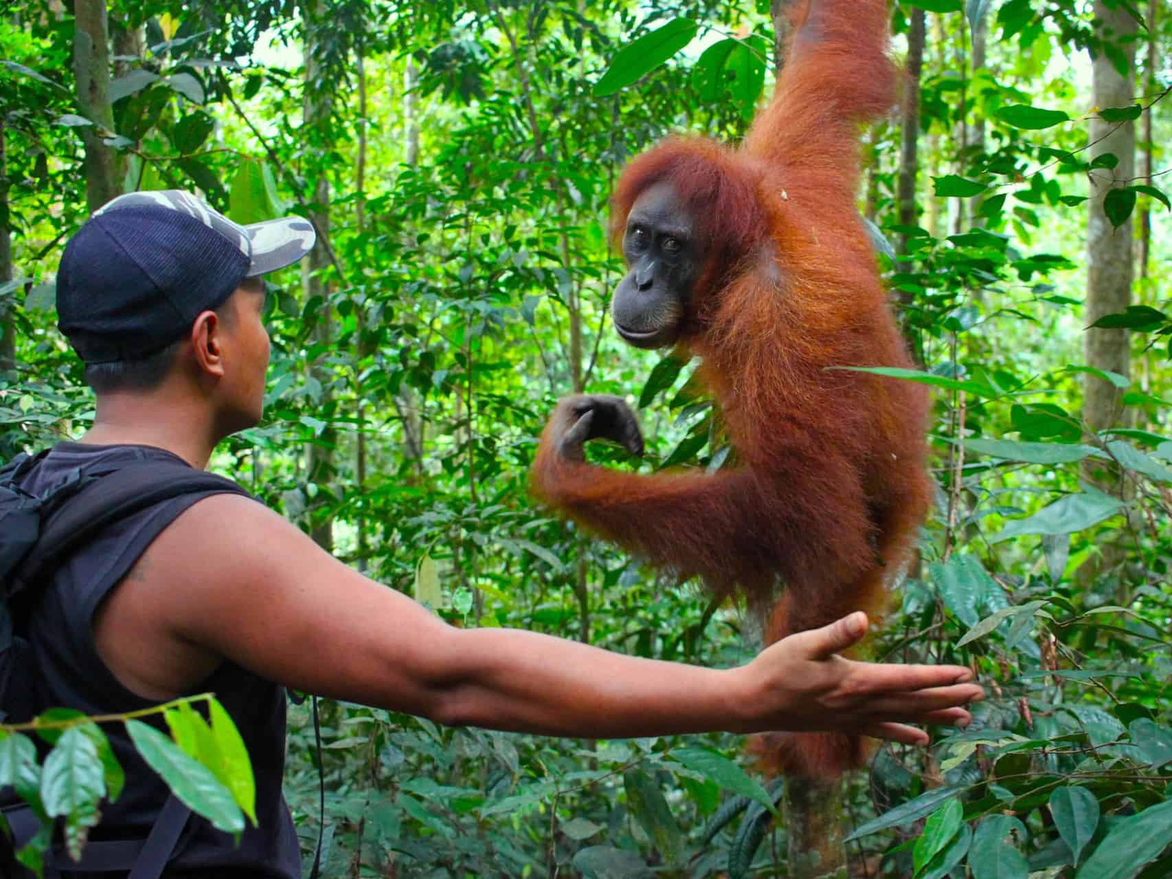 BUKIT LAWANG JUNGLE TREKKING - 1-DAY TREK - JUNGLE VIEW HIKE - SUMATRA ECOTRAVEL