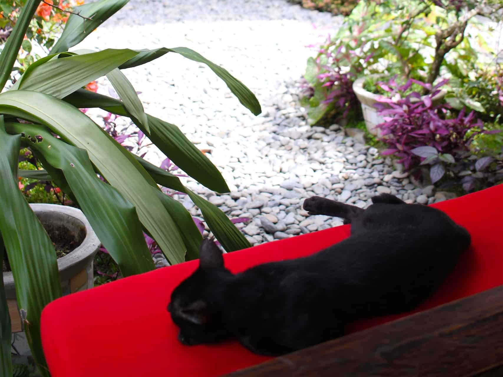 CHILL OUT TIME AT ECOTRAVEL COTTAGES BUKIT LAWANG - SUMATRA ECOTRAVEL