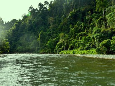 RIVER VIEW AT ECOTRAVEL COTTAGES BUKIT LAWANG - SUMATRA ECOTRAVEL