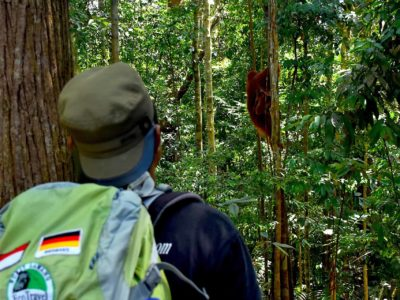 ORANGUTAN TREKKING - SUMATRA ECOTRAVEL BUKIT LAWANG