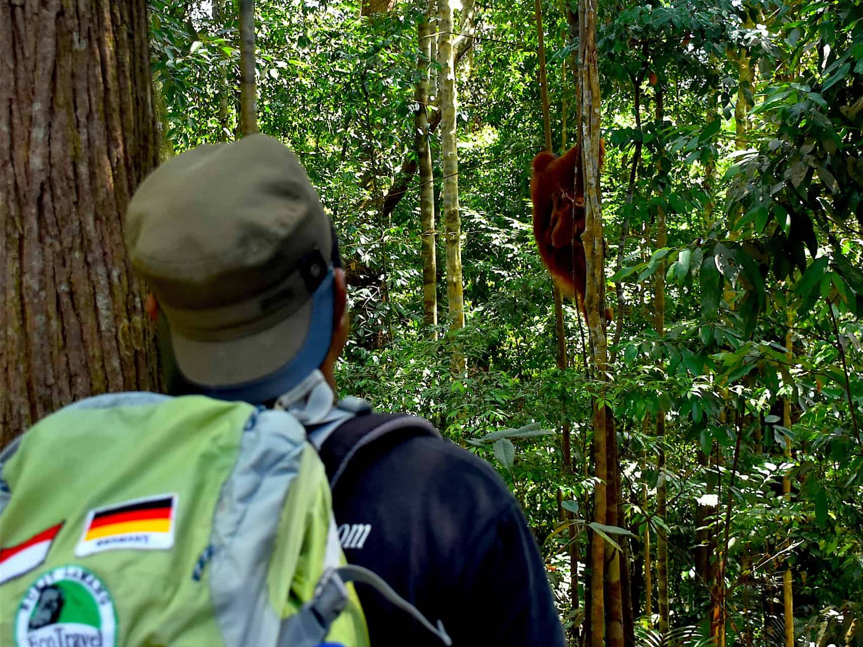 JUNGLE TREKKING - SUMATRA ECOTRAVEL