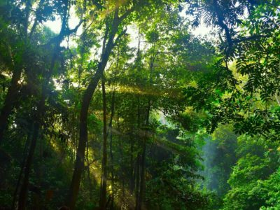 SUMATRAN RAINFOREST - JUNGLE TREKKING - SUMATRA ECOTRAVEL