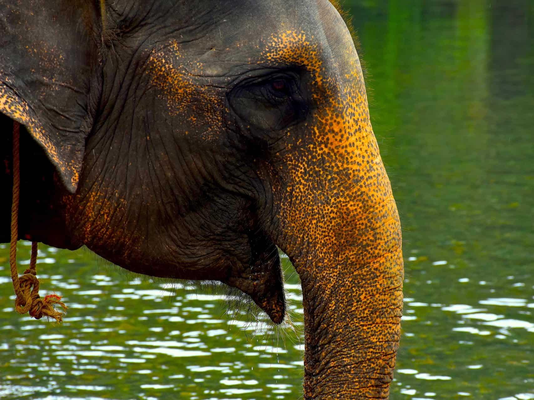 TANGKAHAN ELEPHANT - SUMATRA ECOTRAVEL
