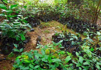 PLANTING TREES - JUNGLE TREKKING - SUMATRA ECOTRAVEL - BUKIT LAWANG