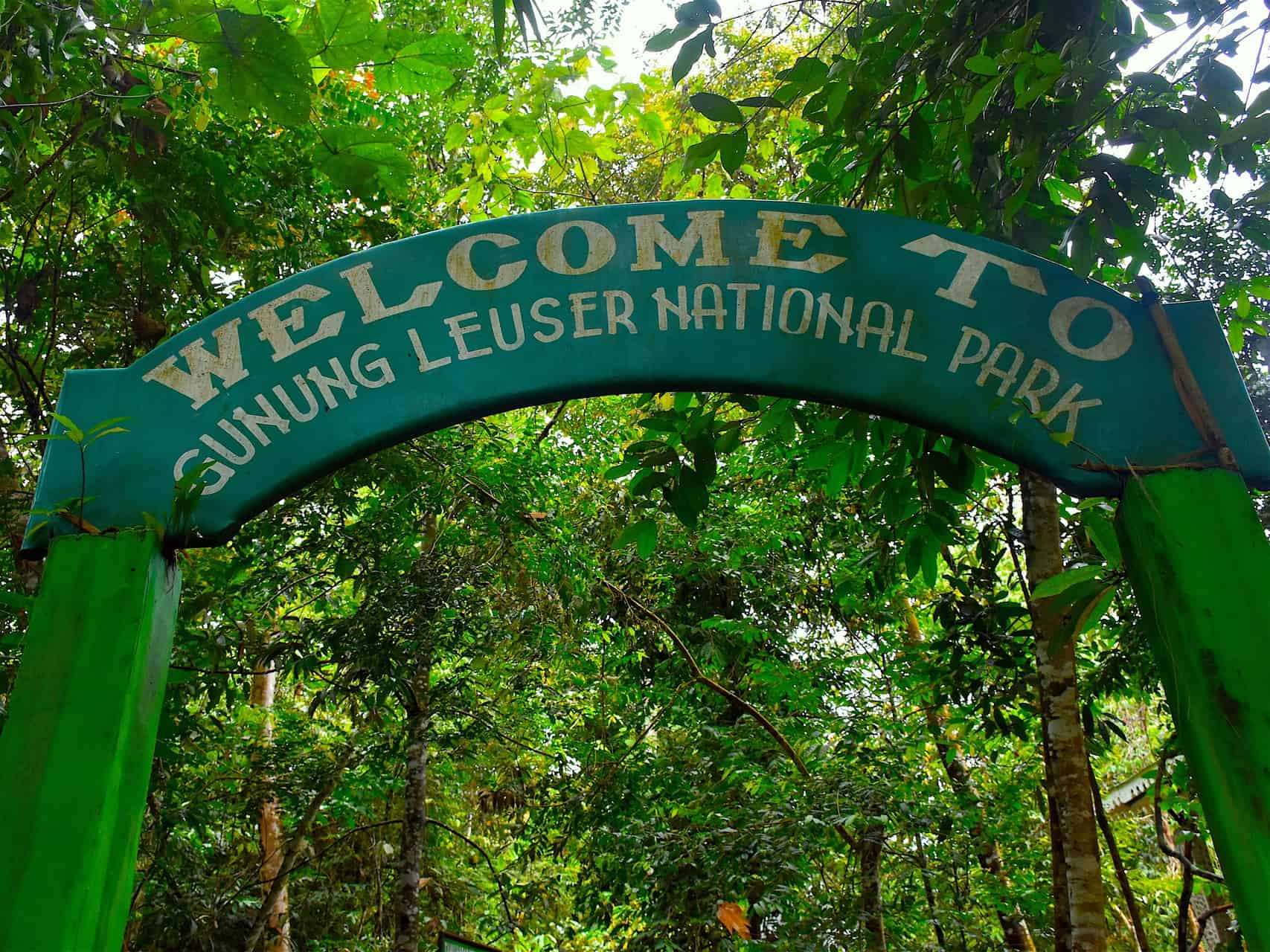Sumatra EcoTravel, Jungle trekking in Gunung Leuser Nationalpark